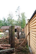 Удаление крон деревьев